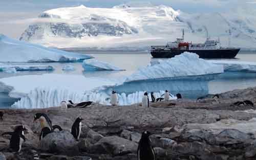 Amenazas de los Animales en Peligro de Extinción Pingüino