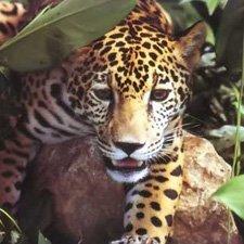 AnImales en Peligro de Extinción Argentina