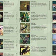AnImales en Peligro de Extinción y sus Caracteristicas