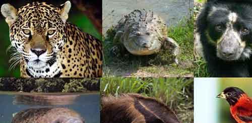 Animales en Peligro de Extinción Consecuencias y Causas