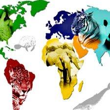 AnImales en Peligro de Extinción Consecuencias
