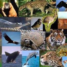 AnImales en Peligro de Extinción Lista