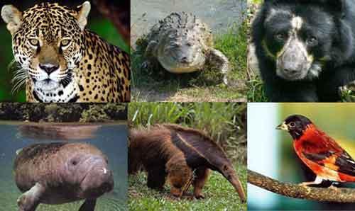 Los Animales en Peligro de Extinción con Nombres