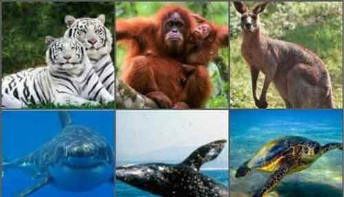 Los Animales en Peligro de Extinción Noticias