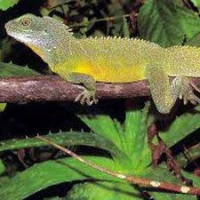 AnImales en Peligro de Extinción Reptiles