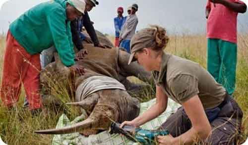 La Caza de Animales en Peligro de Extinción Causas