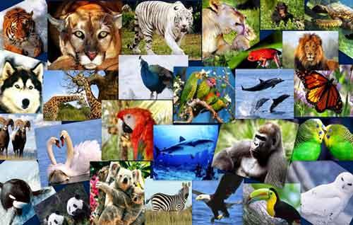 ¿Cuáles son los Animales en Peligro de Extinción México?