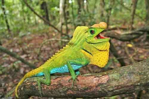 ¿Cuáles son los Animales en Peligro de Extinción Reptiles?