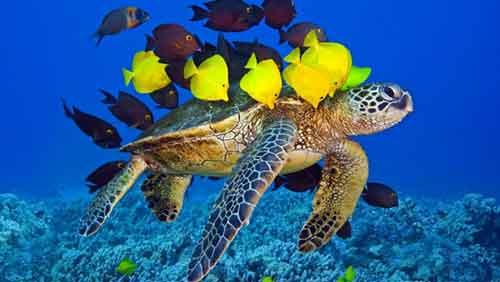 Hábitat de los Animales en Peligro de Extinción la Tortuga Marina