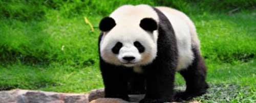 Importancia de cuidar a los Animales en Peligro de Extinción Imágenes