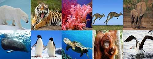 Lista de Animales en Peligro de Extinción Imágenes