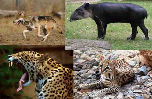 Lista de Animales en Peligro de Extinción Información