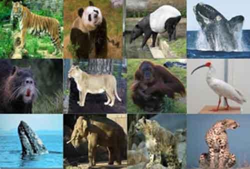 Nombres de los Animales en Peligro de Extinción Asia