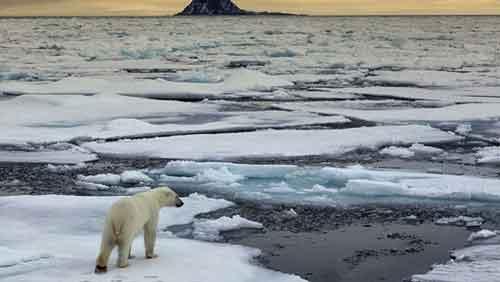 Oso Polar Animal en Peligro de Extinción Cambio climático