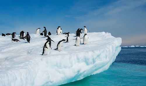 Pinguinos Animal en Peligro de Extinción Cambio climático