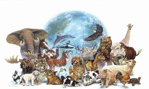 Protección Animales en Peligro de Extinción México