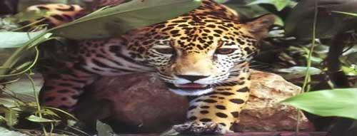 Tipos de Animales en Peligro de Extinción Argentina